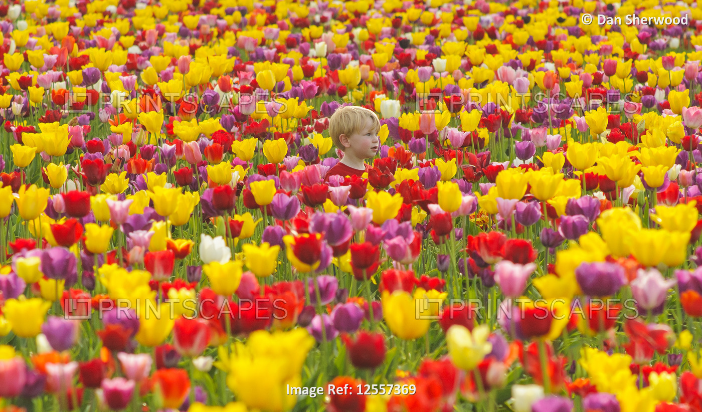 Sam at the Wooden Shoe Tulip Festival - Woodburn, Oregon