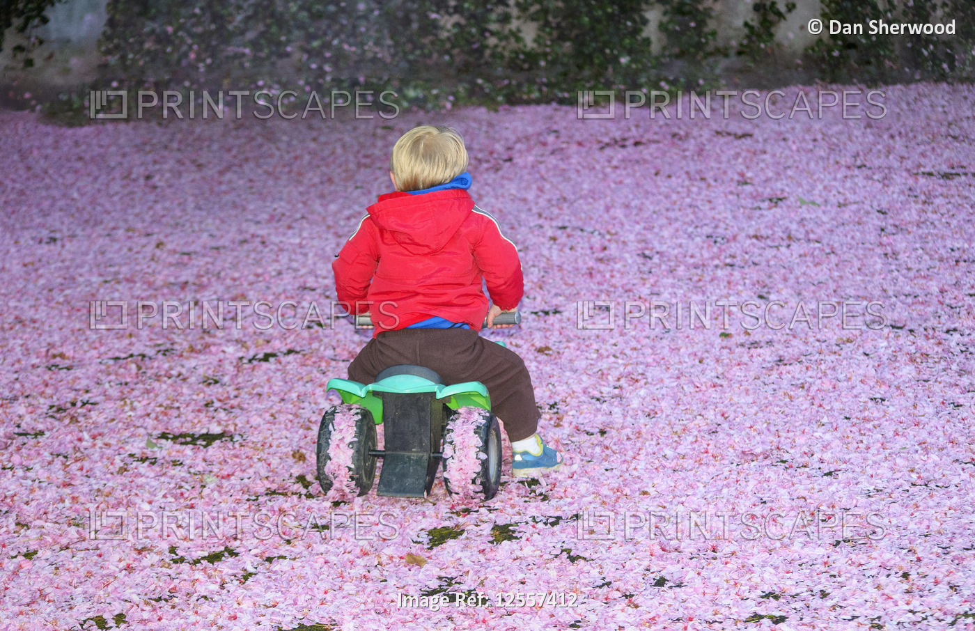 Toddler Riding a Toy ATV on a Carpet of Pink Petals - Portland, Oregon